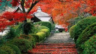 automne-11