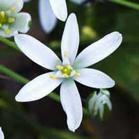 star_of_bethlehem_sm