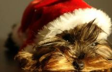 Χριστουγεννιάτικα φυτά και κατοικίδιο ζωάκι
