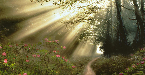 the-light-of-morning-on-the-forest-paths