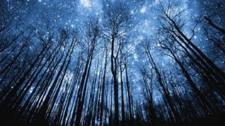 tessas_star_trees